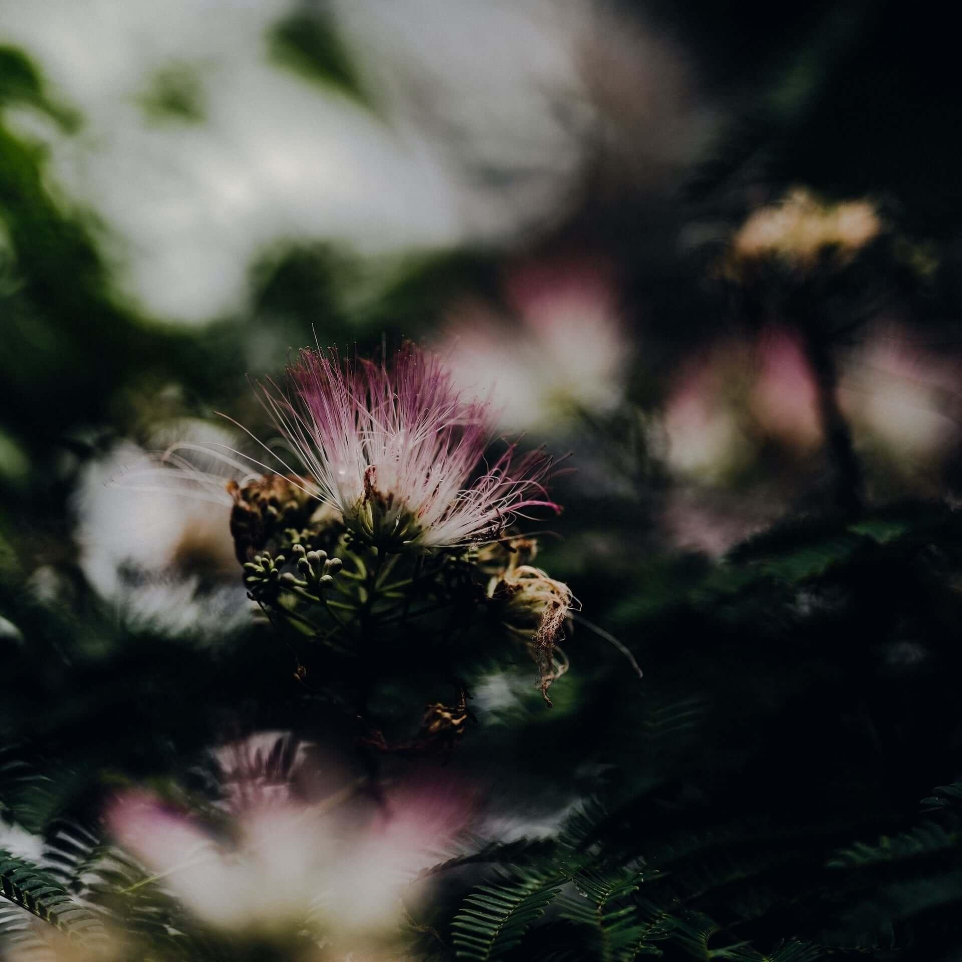 北里彰久 - In Bloom